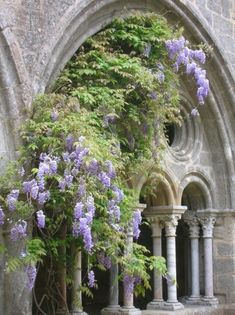 Wisteria in Bloom Outside and in the Home   The Well Appointed House Blog: Living the Well Appointed Life