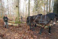 Pferdeverbot – Waldboden in Gefahr
