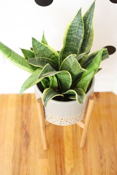 --Wood Plant Stand Tutorial