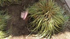 Kertépítés 4. nap - Kerti dísznövények telepítése, terület mulcsozása #k...