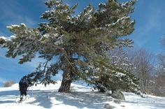 Parco Nazionale della #Sila #Calabria #snow
