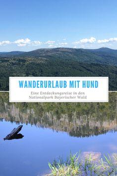 Der Nationalpark Bayerischer Wald ist ein Paradies für Wanderer und Outdoor-Begeisterte. Hier lassen sich noch Urwälder, stille Seen und abgelegene Almwiesen entdecken – eine Erkundungstour mit Hund.