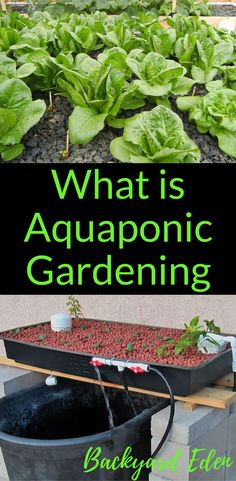 What is Aquaponic Gardening | Posted by: SurvivalofthePrepped.com