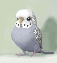 Budgies are awesome. I'm just that pro at drawing budgies.o I like budgies. Cute Animal Drawings, Animal Sketches, Bird Drawings, Cute Drawings, Art Sketches, Pretty Art, Cute Art, Budgies, Parrots