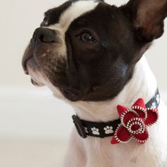 Red Zipper Dog Collar Flower  Free Shipping by HappyDogClothes, $8.00 on etsy