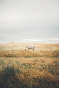 Wild Nature Landscape Iceland 70 Ideas For 2019 Equine Photography, Animal Photography, Nature Photography, Photography Ideas, Adventure Photography, Landscape Photography, Horse Girl, Horse Love, All The Pretty Horses