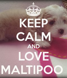 KEEP CALM AND LOVE MALTIPOO...We Love Our Sweet Little Girl :) #Puppy #Princess #bestDogEVER
