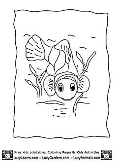 Clown Fish Coloring PageClown Page Animal Pages Of
