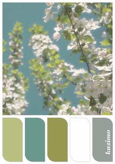 Apple Blossoms, color palette created by Susan Tuttle from one of her photographs