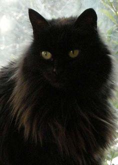 Muska is a Russian cat
