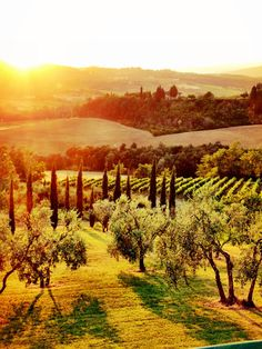 Tuscany | Mulberry and Pomegranate