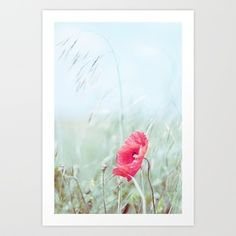 Thoughtful Poppy Art Print by Donna R  - $20.00