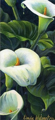 Calla Lillies by Linda Wilmot Acrylic Calla Lillies, Calla Lily, Watercolor Flowers, Watercolor Paintings, Arte Floral, Pastel Art, Pictures To Paint, Beautiful Paintings, Painting Inspiration
