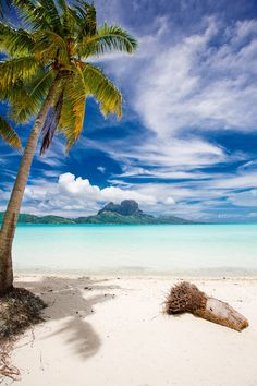 Bora Bora Palm – Because I'm at home instead of in this heavenly place? *-* Bora Bora Palm – Because I'm at home instead of in this heavenly place? Dream Vacations, Vacation Spots, Bora Bora Island, Places To Travel, Places To Visit, Magic Places, Tropical Beaches, Belle Photo, Beautiful Beaches