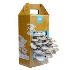 grow your own mushroom kit, uncommongoods.com, $20