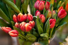 Amarillo Daffodil fotografía Gemelos Con Bolsa De Regalo De Primavera floristería Jardinero Nuevo