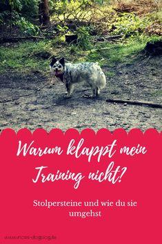 Wenn es bei euch im Training nicht so rund läuft, kann das folgende Gründe haben.  #hundetraining #hundeerziehung lernen Yorkie, Dog Love, Dogs, Movie Posters, Dog Fashion, Dog Stuff, Diana, Future, Board