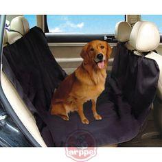 b1598a86 Las 20 mejores imágenes de Correas Flexi para perro | Small Dogs ...