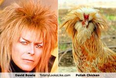 | The Top Hat Chicken