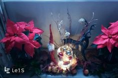 Christmas arrangement with natural posenthias