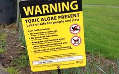 FYI Toxic algae monitored in Thurston County lakes - http://www.theolympian.com/news/local/article71560267.html