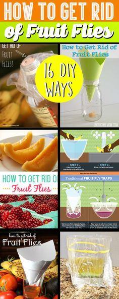 16 Best Ways to Get Rid of Fruit Flies & DIY Fruit Fly Traps