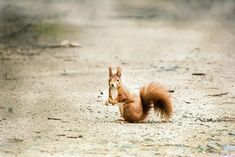 Cute squirrel, rodent, animal wallpaper