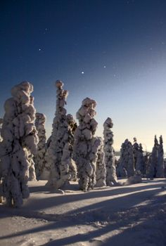 Moonlight, Lappi Lapland Photo Aili Alaiso