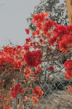 red aesthetic vintage Flowers Everywhere Aesthetic Painting, Aesthetic Drawing, Aesthetic Gif, Aesthetic Collage, Aesthetic Backgrounds, Aesthetic Iphone Wallpaper, Aesthetic Wallpapers, Aesthetic Dark, Aesthetic Pictures