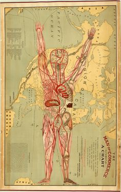 """""""""""The Man of Commerce"""" is a detailed map that conflates human anatomy with the American transportation system. Published in 1889 by the Land & River Improvement Company of Superior, Wisconsin, the map. History Of Capitalism, Heart Circulation, Reds Bbq, The Body Book, The Good German, North America Map, Human Body Systems, Arts Ed, Human Anatomy"""