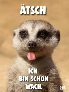 Tierischer Humor, Man Humor, Good Morning, Cartoon, Cool Stuff, Comics, Memes, Funny, Animals