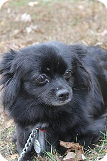 Adoptable Small Dogs In Maryland