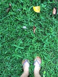 grass has never seem so green