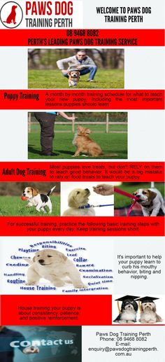 We provide Cheapest Paws Dog Training in WA to train your dog or young puppy To know more contact us at 111 St Georges Terrace, PERTH WA 6000 or  Call us at 894688082.