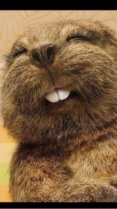 Do you know the state animal of NY? It's the beaver. A baby beaver is a kitten. I present the obligatory kitten picture for online posting. See the smile? He must have seen Around the World in 80 Days at Arizona Theatre Company. TUCSON 3/1 - 3/22; PHOENIX 3/27 - 4/13.