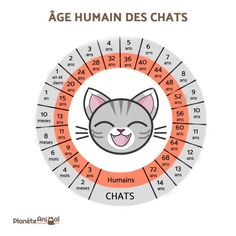 How Old Is Cat In Human Years - World's largest collection of cat memes and other animals I Love Cats, Crazy Cats, Cute Cats, Adorable Kittens, Cat Ideas, Animals And Pets, Cute Animals, Long Cat, How To Cat