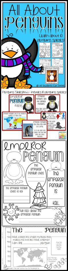Plenty Of Penguins!