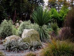 New zealand garden design Drought tolerant plants are efficient in the higher elevations of New Zealand as well as in the Seattle area too. You might never imagine that our region . Tropical Garden, Garden Design, Backyard Plants, Garden Landscape Design, Plants, Native Plants, Native Garden, Garden Planning, Dry Garden