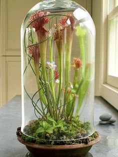 An old-fashioned dome makes a perfect container for tall plants. Click for details.