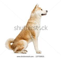 side view dog - Google 검색