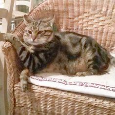 #buongiorno dal #gatto #goodmorning #cat #venerdi #sonno #sleep #colazione #breakfast