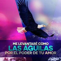α JESUS NUESTRO SALVADOR Ω: Los que esperan en el Señor renuevan sus fuerzas…