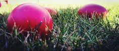 Grass Close-up Beauty In Nature Egg Grass Round Shape Egg Shaped Colors Food Healthy Lifestyle EyeEmNewHere