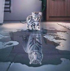 Fond d'écran - reflet chat et tigre - lumineux