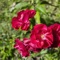 Una flor para otra flor #flower #pink #red #green #beatiful #nature #garden #yard #etc