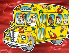 Magic school bus/scholastic lesson on bones & muscles: Your students can explore bones and joints by comparing their own hands and arms to a chicken wing.