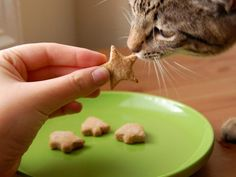Pet-Approved Recipes to Try for Cats  Ripley Bites  Source: AmyBites.com