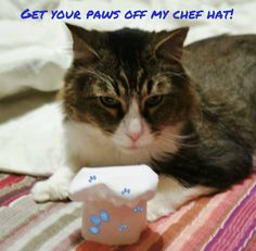 How To Make a Chef Hat Toque Pattern for Large or Small Pets