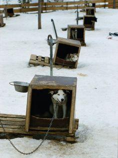 http://www.allposters.co.jp/-sp/Dog-Sled-Tours-Karasjok-Finn-Norway-Posters_i4008171_.htm
