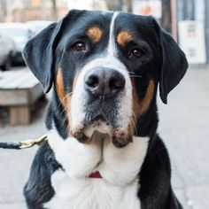 """The Dogist 